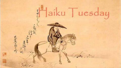 Haiku Tuesday