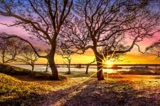 oak-trees-at-sunrise-debra-and-dave-vanderlaan