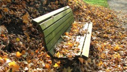autumn-bench