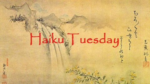 Haiku Tuesday
